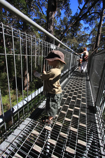 Treetop walk is Child Friendly